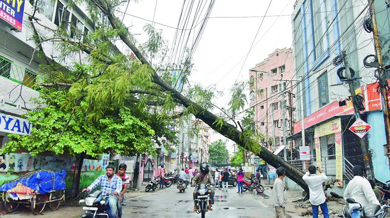 A tree gets uprooted after heavy rains near Fever Hospital at Nallakunta in the city on Sunday.  — S. Surender Reddy