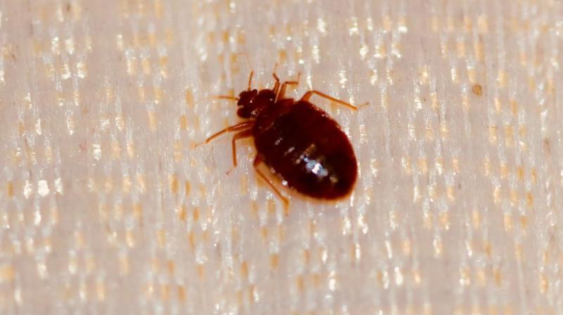 To avoid this disastrous infestation, make sure you don't bring them inside your home. (Photo: Representational/Pixabay)