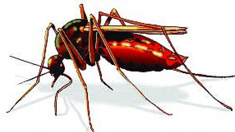 Many dengue patients come to hospitals after their platelet levels have dropped, and thus require platelet transfusion which costs about Rs 3,000 per transfusion packet.