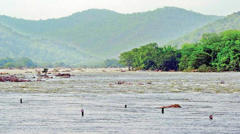 The dissolved load yield is higher for Cauvery river when compared to other rivers around the world.