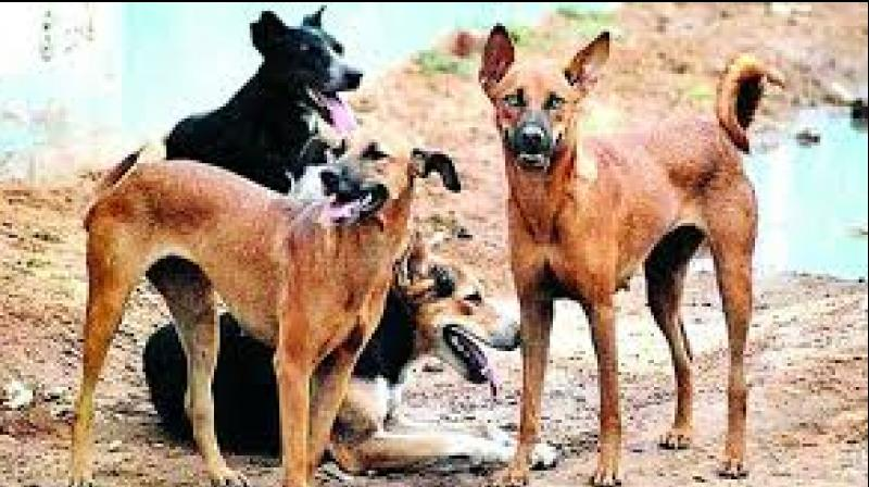 A case in this regard has been registered under the Animal Cruelty Act. (Representational Image)