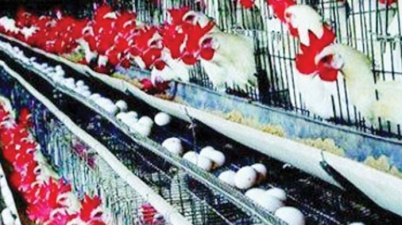 H5 Avian Influenza outbreak in Karnataka village
