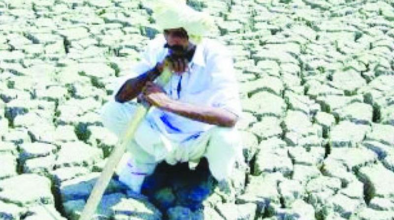 "More than three lakh farmers in India have committed suicide since the bioimperialists entered our agriculture through globalisation and the so-called ""free trade""."