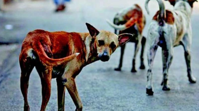 The stray dogs had attacked cattle before attacking the babies.