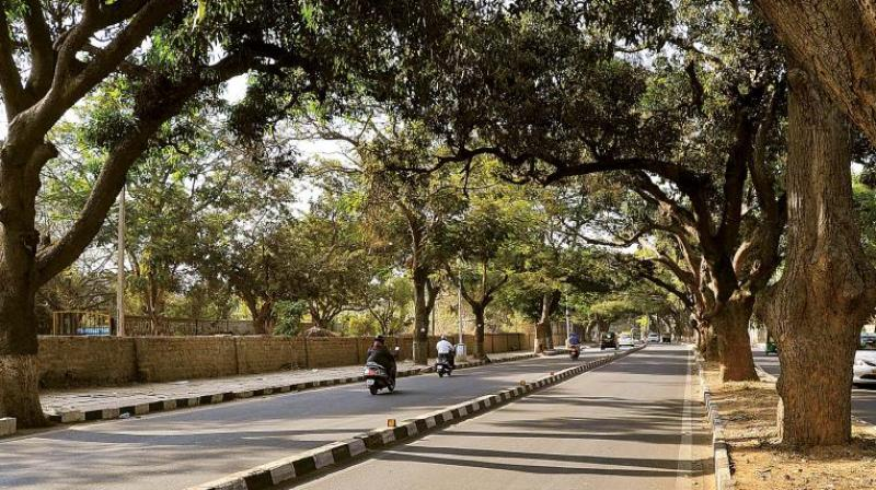 The amendment, which was introduced earlier exempted permission for chopping around 50 species of tress without permission of land holder/farmer or public consultation, which had raised concerns among the environmentalists.