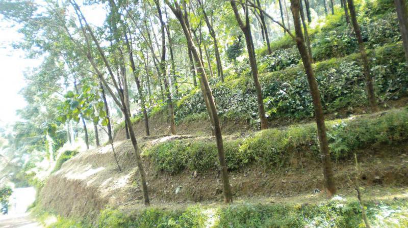 Kinaloor estate