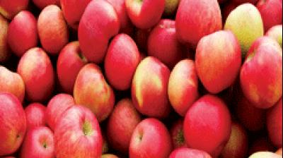 The state administration also confirmed that the apple producers will get payment directly in the bank accounts through direct benefit transfer.
