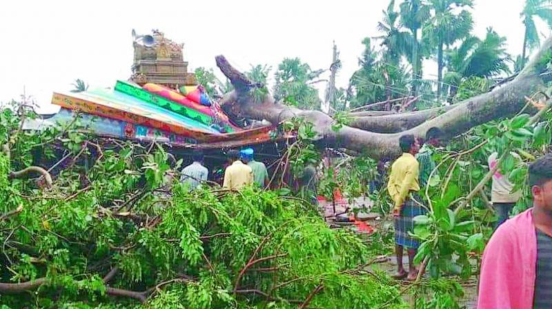 Huge tree was uprooted damaging a temple in Srikakulam district. (Photo: DC)