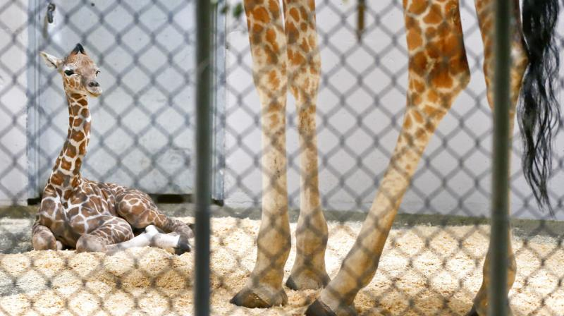 The newborn's name was not publicly announced before his untimely death. (Photo: AP)