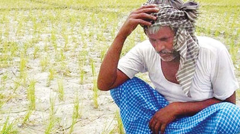 The Shiv Sena on Monday said the intricacies of government formation in Maharashtra should not push rain-hit farmers towards existential crisis and demanded that they be provided relief package of about Rs 30,000 crore. (Representational Image)