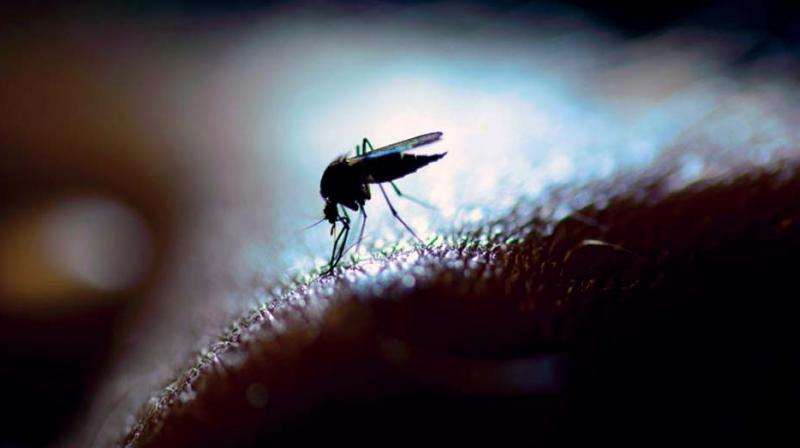 A senior BBMP health officer too admits that the recent rain in the city has left stagnant pools of water, which are encouraging the breeding of mosquitoes.