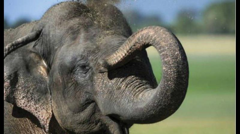 The death of a captive elephants in the state seems to have become as much a non-event as the death of a stray on a busy road.