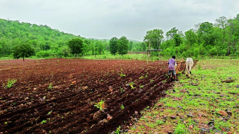 A farmer ploughs his field in Dharmajipet in Utnoor mandal on Wednesday. —DC