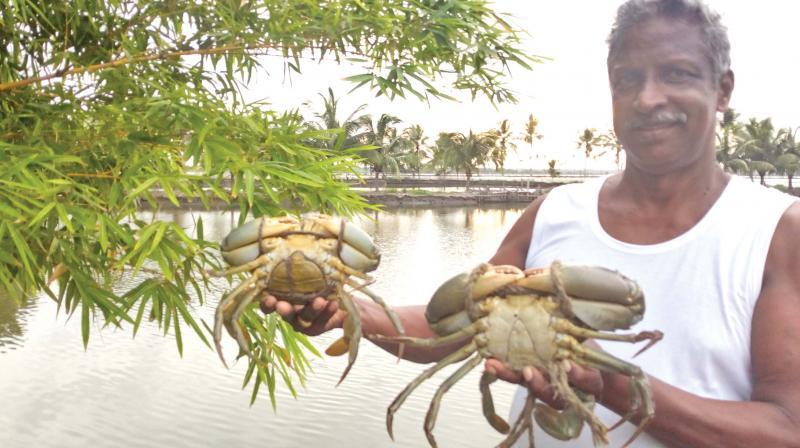 John Kalluveetil, a farmer in Kadamakudy, with live crabs -DC