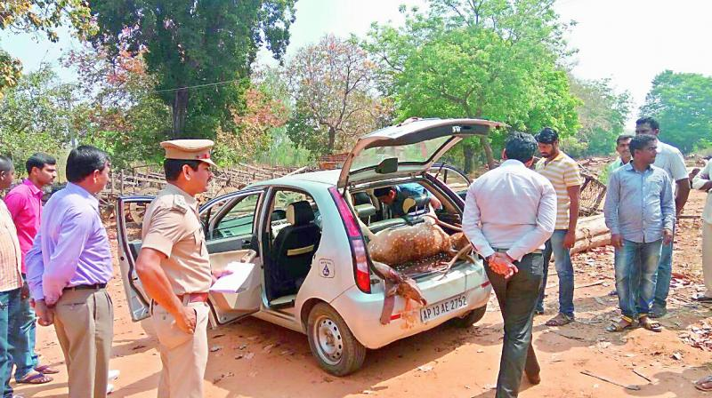 The carcass of the two spotted deer killed by hunters from Hyderabad in the Mahadevepur forests of Jayashankar. (Photo: DC)