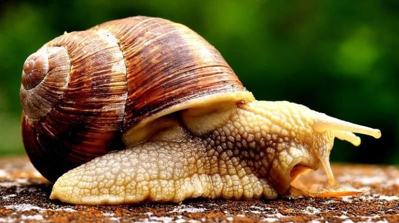 Toly Moly and Missha are creating skincare products with snail secretion (Photo: Pixabay)