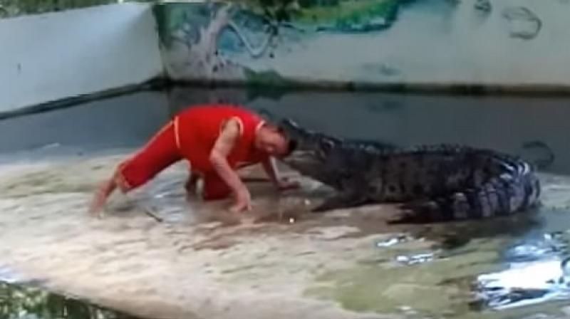 Zookeeper in Thailand gets his head bitten by croc (Photo: Youtube)