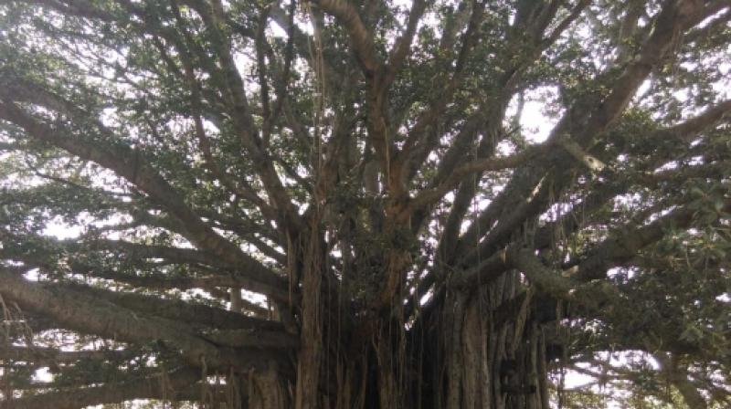 banyan tree vision and mission statement