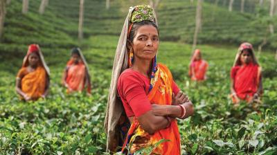 Women workers at a tea plantation.