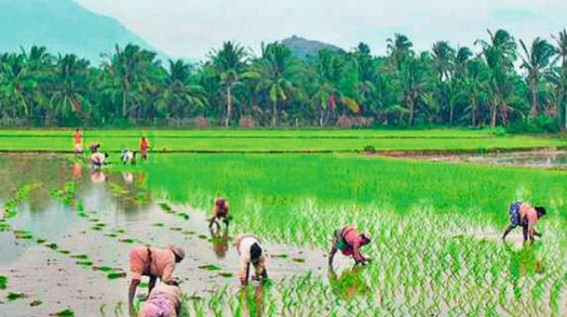 There are around 48 lakh small and marginal farmers in TS who have less than five acres of agriculture land. (Representation image)