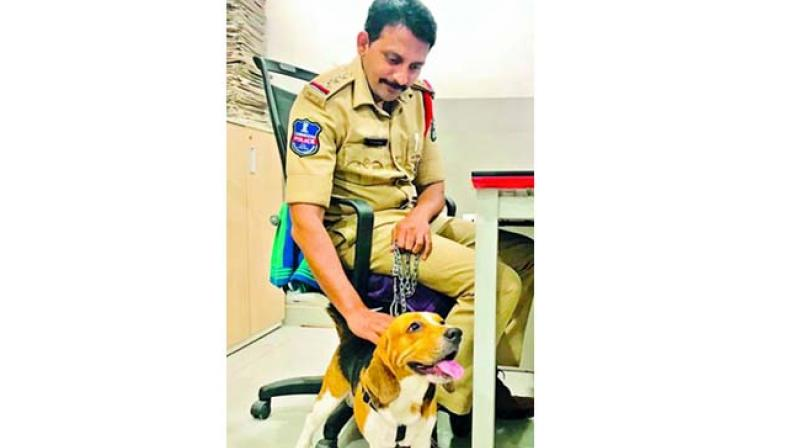 According to East Zone police officials, the beagle, Brownie, went missing on the intervening night of May 22 and 23.