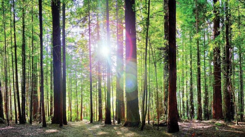 "For bathing in forests, one need not go to far-off forests as people can have it in city parks, gardens, sea shores, river banks  or any place with plenty of trees,"" Dr Ouseph said."