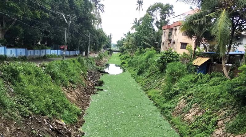 Weeds and water hyacinths are being removed as part of restoration works of Andhakarathodu.