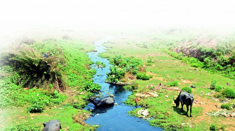 With the formation of a dead zone in Bay of Bengal, Sri Lanka's Marine Environment Protection Authority has recently urged the neighbouring countries to frame stringent laws against marine pollution.