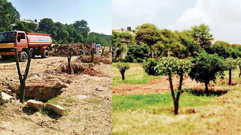 The BMRCL agreed to provide men and machines for the translocation of trees, while members of the tree committee pitched in with expertise, completing the project within months.