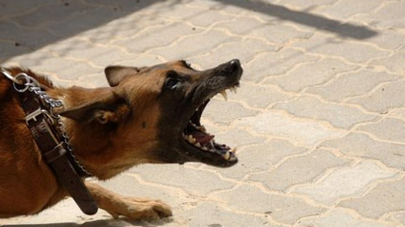 The study shows the emotional impact than attempting to manage a reactive dog can have, with its associated ups and downs. (Photo: Representational/Pixabay)