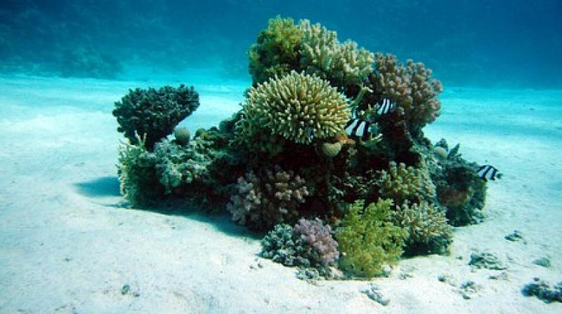 Several species of Caribbean corals have long fossil records showing that they have persisted through major changes in Earth's history. (Photo: Representational/Pixabay)