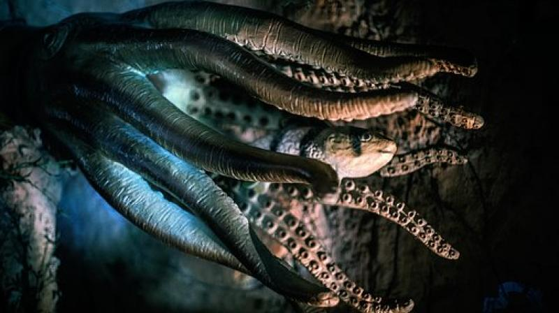 The new research supported previous findings that octopus' suckers can initiate action in response to the information they acquire from their environment, coordinating with neighbouring suckers along the arm. (Photo: Representational/Pixabay)