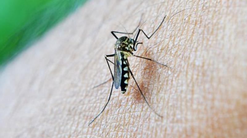The drug makes the malaria pathogen unable to metabolise or reproduce. (Photo: Pixabay)