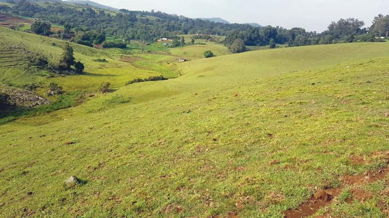The area on the northern side of Ooty-Mysuru road in Shootingmund locale wherein the Meadow Garden is proposed. (File Photo)