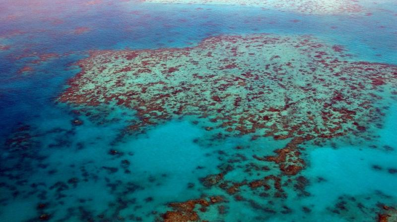 Several disturbances were recorded in the reefs, such as coral bleaching which caused rising of water temperatures. (Photo: Representational/Pixabay)