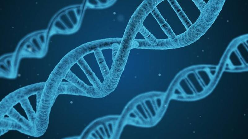 Found: more than 500 genes that are linked to intelligence