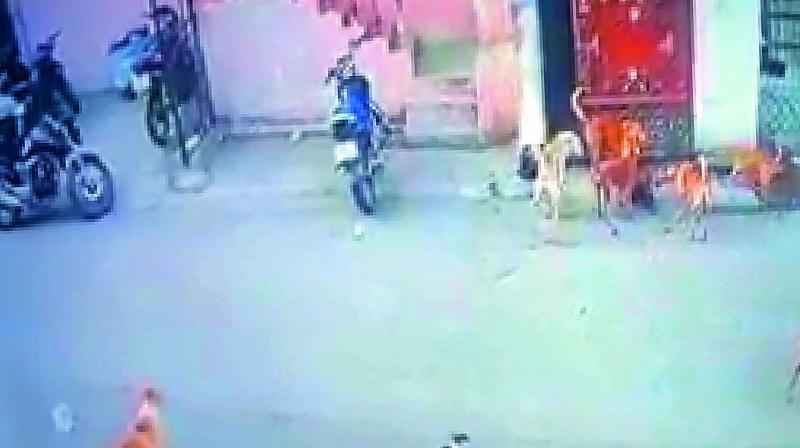 A screengrab of stray dogs dragging out a domstic rooster from the house of Shaik Riyaz of Bazaar Ghat. It was, however, rescued a passerby.