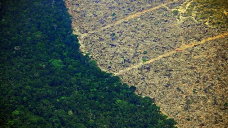 Extensive cattle farming is the main driver of deforestation in the Amazon, with just over 65 percent of deforested land in the Amazon now being grazed. (Photo: AFP)