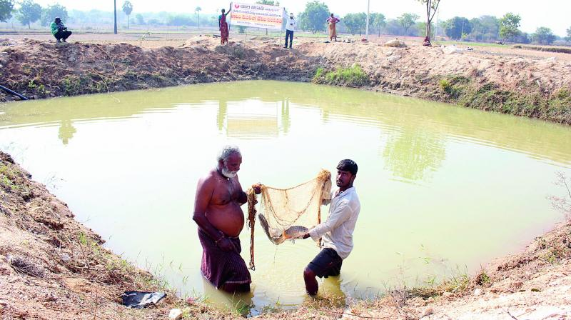 A farmer in Pamnoor shows the fish he cultivated in his farm pond.   (DC)