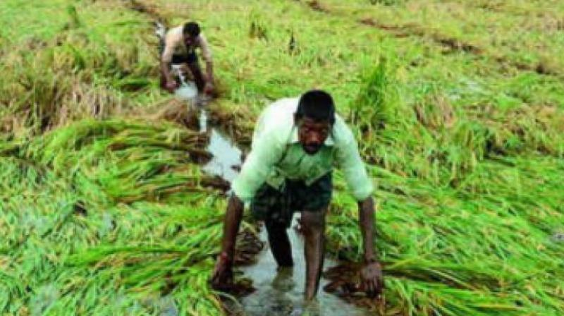 Farmers suffered huge losses in Adilabad district as rains washed away crops over 1.60 lakh acres. (Representational image)