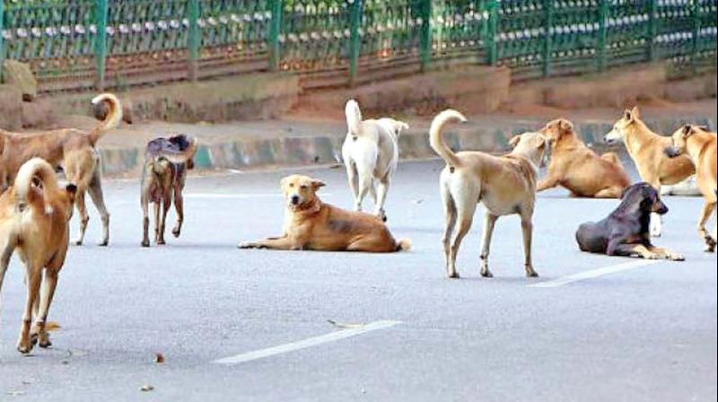 Search Dog Adoption In Hyderabad