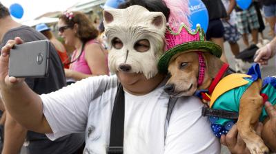 Carnival preparations see pet owners taking to streets with their four-legged furry friends in ornate costumes. (Photos: AP)