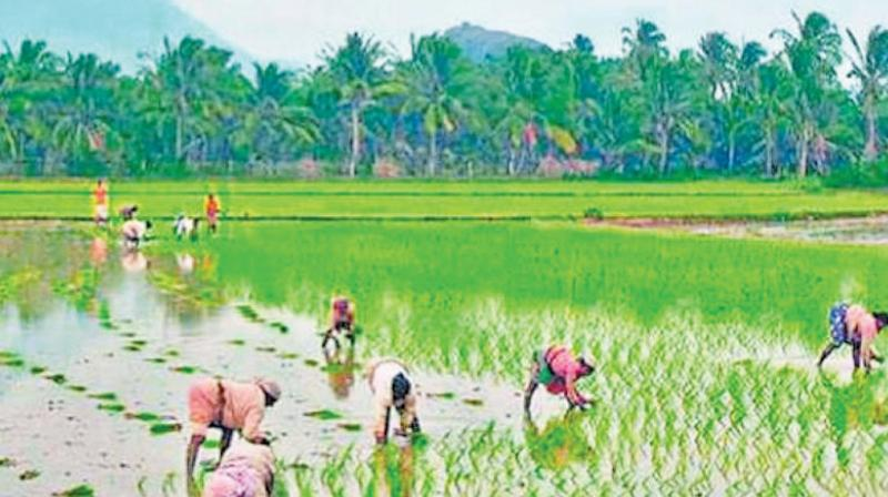 With a majority of Telangana's farmlands being rain-fed (63 per cent), the state's agriculture sector will be deeply affected if corrective measures are not taken.