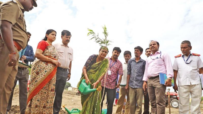 The Central team along with Chennai district collector R.Seethalakshmi inspects the Pallikaranai marshland and plants saplings. (Photo: DC)