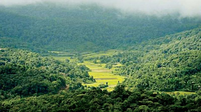Dakshina Kannada and Udupi lost more than 70 per cent of total tree cover.