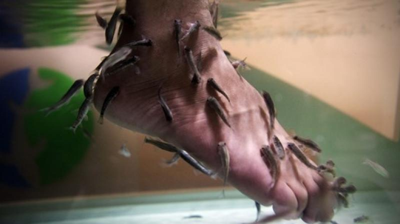 Fish pedicures became a popular beauty trend a while back (Photo: AP)