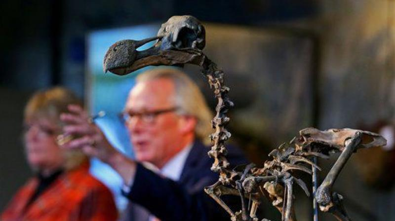 The total paid money for the skeleton would be 346,300 pounds which includes the fee of the auction house (Photo: AP)