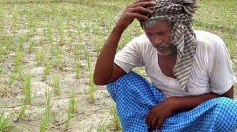 According to Crisil, after two consecutive years of normal monsoon, India received below-normal rains in 2018, both in terms of spatial distribution and timeliness. As per Ministry of Agriculture, total kharif crop acreage has crossed 975 lakh hectares as on August 23, which is down by 2.3 per cent from corresponding period last year. Rice, sugarcane and groundnut acreage has dwindled the most this season. (Representational Image)