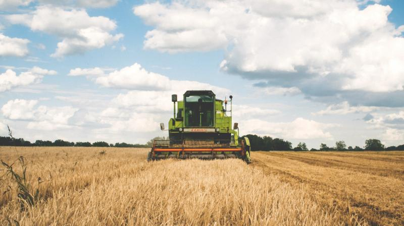 ICT and the recent addition of IoT have started transforming the agriculture industry and helping farmers to improve their crops productivity and yield. (Representative image: Pexels)