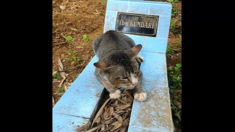 The cat walks back to her former home everyday where she is fed by her owner's children and then returns to the grave. (Credit: YouTube)